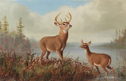 stag and doe by arthur fitzwilliam tait