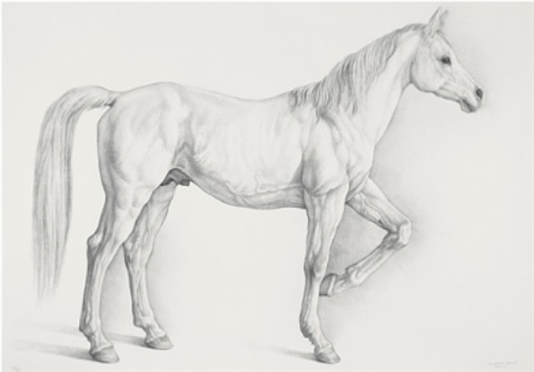 caballo blanco (white horse) by claudio bravo