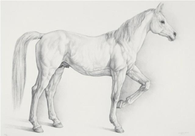 caballo blanco (white horse) by claudio bravo