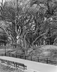 american elm, central park, new york (aus der serie new york arbor) by mitch epstein