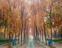 sweepers, west lake, hangzhou, china by david burdeny