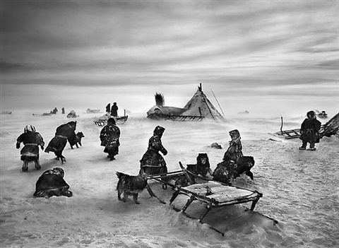 nenets, an indigenous nomadic people, whose main subsistence come from reindeer herding, south yamal region, siberia, russia by sebastião salgado