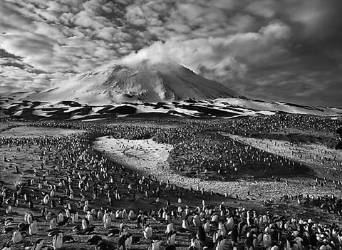 macaroni penguins in zavodovski island, the sandwich islands by sebastião salgado