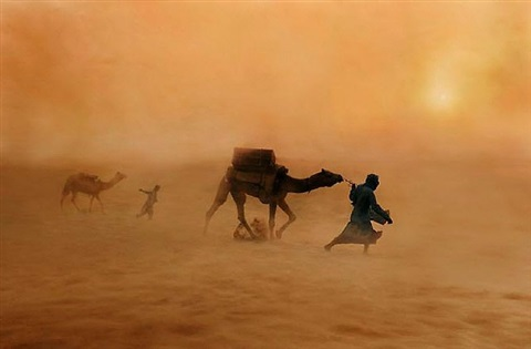 camels in dust storm by steve mccurry