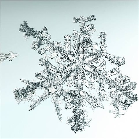 untitled snowflake by doug and mike starn