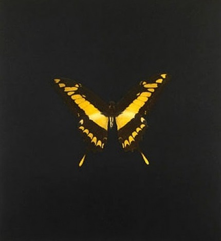 the souls on jacob's ladder take their flight (small yellow/black) by damien hirst