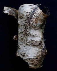 torso by terri zupanc