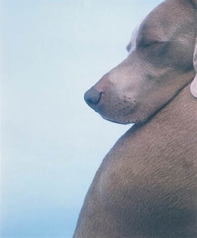 head on back by william wegman