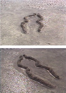 ana mendieta late works 1981 1985 by ana mendieta