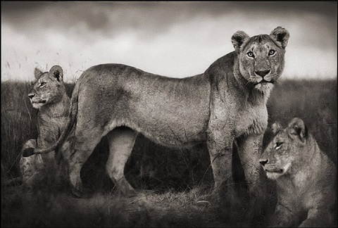 untitled by nick brandt
