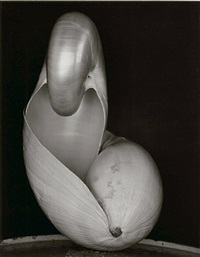 two shells by edward weston