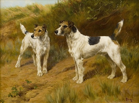 fox terriers on the look-out by thomas blinks