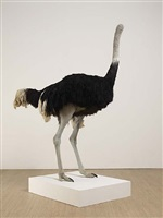 ostrich by david shrigley