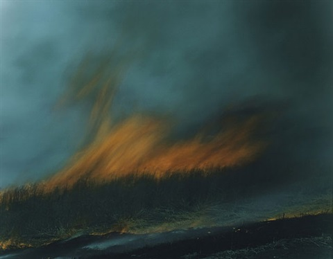 untitled, from the series ametsuchi by rinko kawauchi