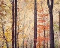 appalachian forest sunrise, virginia by christopher burkett