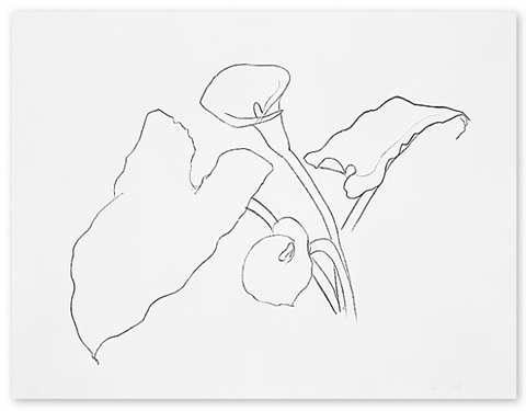 calla lily 1 by ellsworth kelly