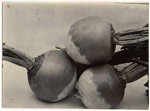 turnip green globe by charles jones