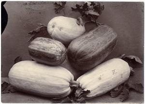 vegetable marrows by charles jones
