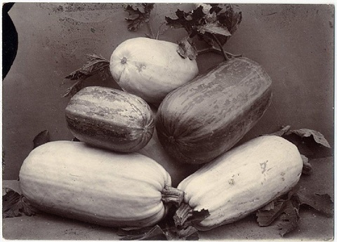 vegetable marrows by charles jones