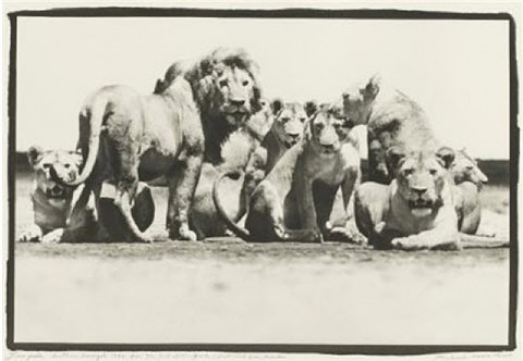 lion pride, southern serengeti, for the end of the game/last word from paradise by peter beard