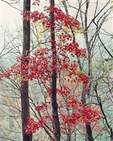 susquehanna maple pennyslvania by christopher burkett