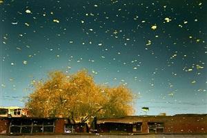 golden autumn: urban amber by han bing