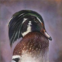 wood duck by kate breakey
