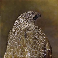 coopers hawk ii by kate breakey