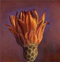 barrell cactus flower i by kate breakey
