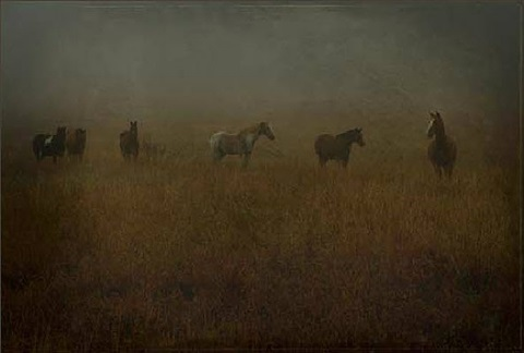 six horses by jack spencer