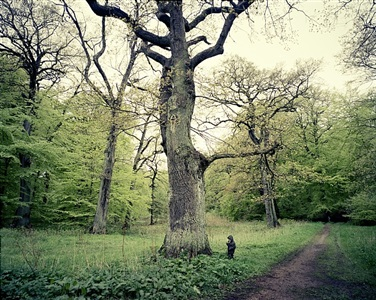 oak tree by joakim eskildsen
