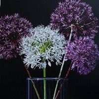 a little bit of allium by glen semple