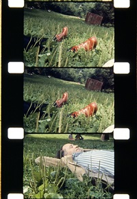 the film maker, central park, nyc, 1974 by jonas mekas