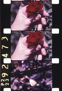 filmed on staten island, 1980 by jonas mekas