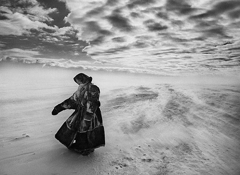 when temperatures fall sharply and fierce winds blow, the nenets and their reindeer may spend several days in the same place until milder weather allows them to continue their migration. by sebastião salgado