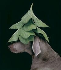 evergreen by william wegman