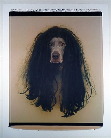 cher (dog in wig) by william wegman