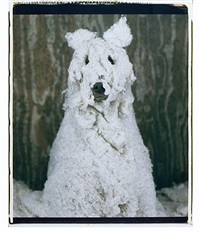 a sheepdog by william wegman