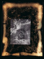 venus rising like a kansas sunflower by william s. burroughs