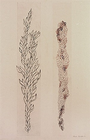 eccentric growth iv by louise bourgeois