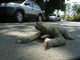 sloth by rafael fuchs