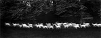 running white deer by paul caponigro