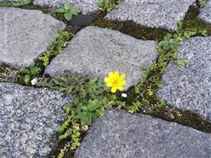 she said 1 (cobblestone flower) by mario strack