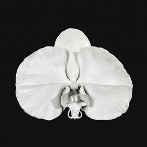 the hegemony of symmetry by marc quinn