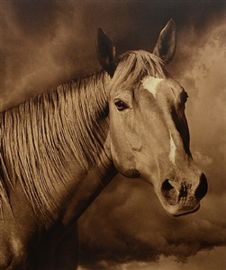 horse #28 by michael eastman
