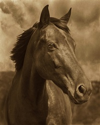 horse #38 by michael eastman