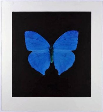 memento - blue butterfly by damien hirst