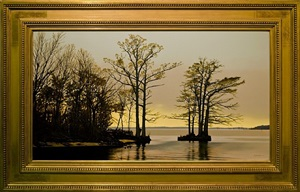 cypress trees on albermarle sound by peter sculthorpe