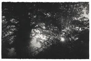 oak in lane by sarah gillespie