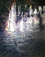 reeds over rings at twilight by david kessler